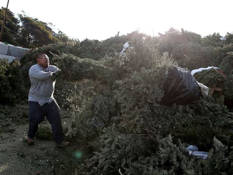 wacky and wise ways to get rid of your christmas tree