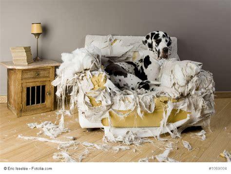 hund pinkelt in wohnung wenn er alleine ist tierversicherung die tierkrankenversicherung