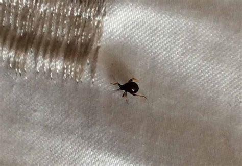 Black Bugs In Pantry by Pantry Beetles Grain Weevils Spider Beetles Meal Worms
