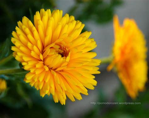 sfondi per desktop fiori sfondi desktop fiori