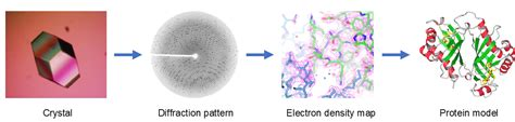 protein x crystallography x crystallography platform creative biostructure