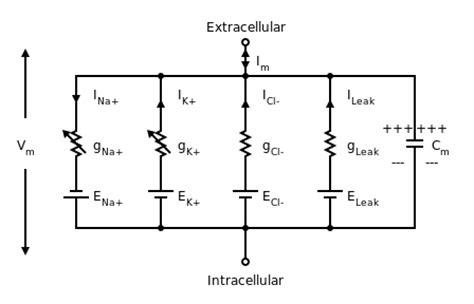 model of simple electric circuit quantitative models of the potential