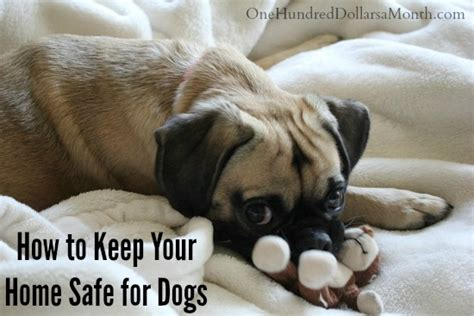 how to keep your home safe for dogs one hundred dollars