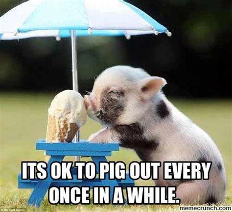 Funny Pig Memes - 25 most ever funniest eating meme pictures on the internet