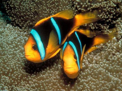 colorful tropical fish memes