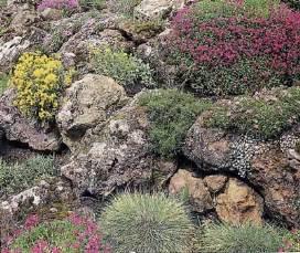 Alpine Rock Garden About Rock Gardens Howstuffworks 2016 Car Release Date