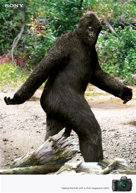 the of bigfoot is bigfoot real poll results bigfoot fanpop