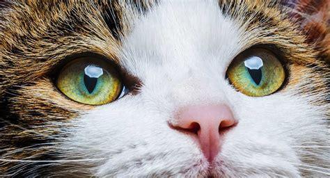 Cat Eye Shades cat eye colors an amazing range of shades