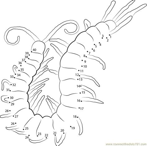 arthropod coloring page arthropod pages coloring pages