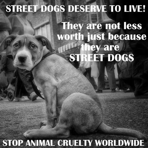 dogs deserve to live they are not less worth just