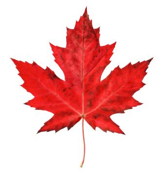 file canadian maple leaf jpg free canadian maple leaf free clip free
