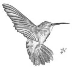 hummingbird drawing hummingbird pencil by asmallglimmer on deviantart