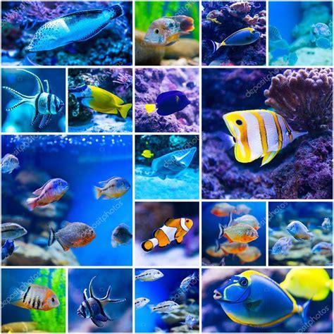 Colorful Fish Tanks Colorful Fish In Aquarium Saltwater World Stock Photo