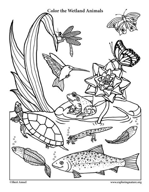 29 best coloring habitats and animals images on pinterest