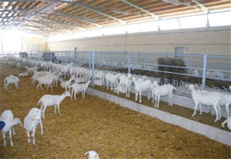 alimentazione per capre foraggiamento ed alimentazione attrezzature ovini e