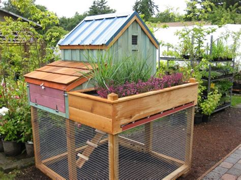 build a chicken coop with a green roof your projects obn