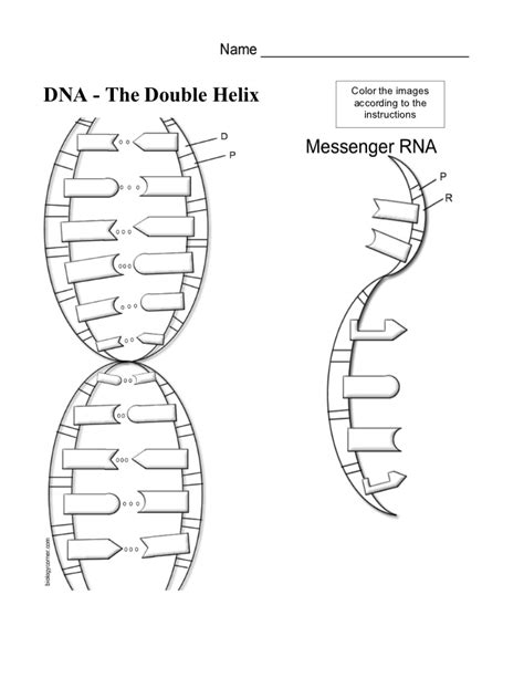 dna the helix coloring worksheet answers printables dna worksheet beyoncenetworth worksheets