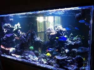 life of tracy saltwater fish tank
