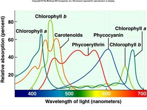 The Major Light Absorbing Pigment In Green Plant Photosynthesis Is by Why Is Sunlight Important To Plants And How Are The