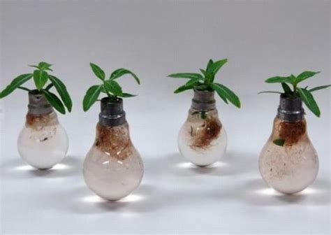 amazing light bulb planters 27 pics izismile com