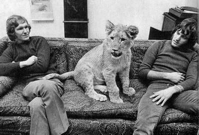 film lejonet elsa christian the lion sophieduffy