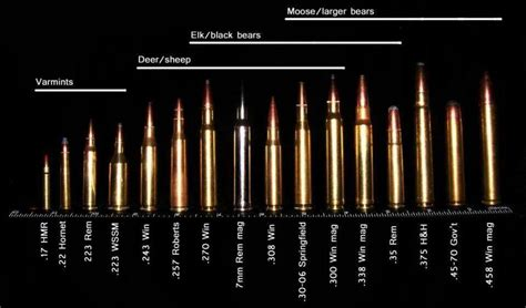 Bullet Comparison Large Caliber Tank Busters One Of 7 Best Images Of Bullet Cartridge Size Chart Bullet