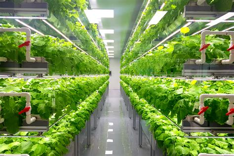 ocado invests   vertical farming latest retail