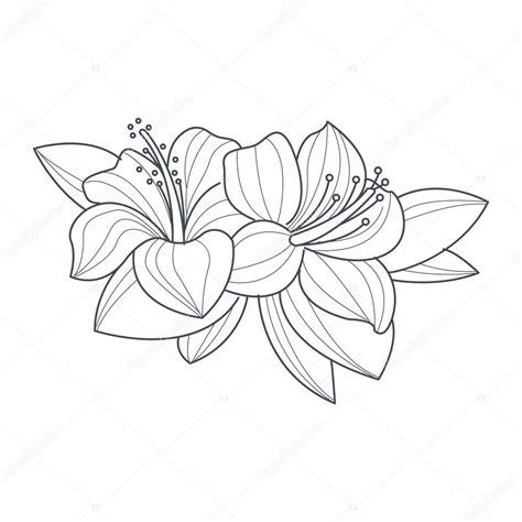 bloemen zwart wit tekening hibiscus bloem zwart wit tekening voor coloring boek