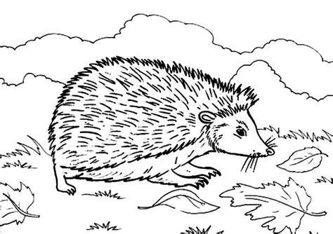 baby hedgehog coloring page baby hedgehogs colouring pages sketch coloring page