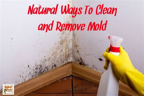 Mold Detox Books by Ways To Clean Mold And Remove Mold By Hybrid Rasta