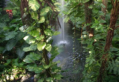 tropical jungle fountain at chrisauman com