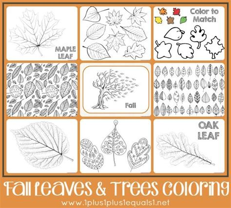 leaf identification coloring pages fall leaves and trees coloring printables 1 1 1 1