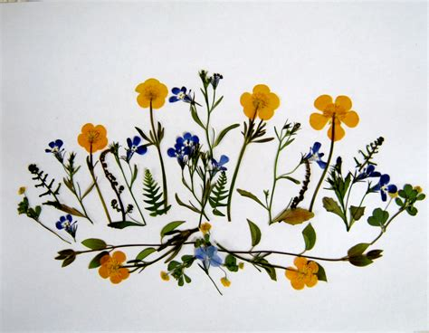 plants and pressed flowers buttercups minding my p s with q