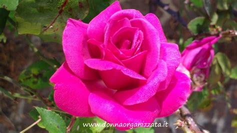il significato dei colori dei fiori significato dei colori delle linguaggio dei fiori
