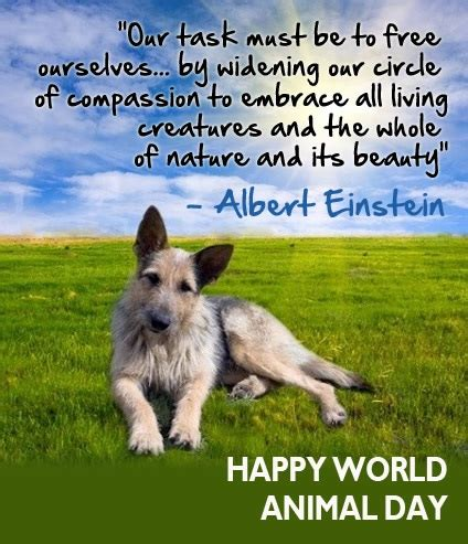 world animal s day pictures images