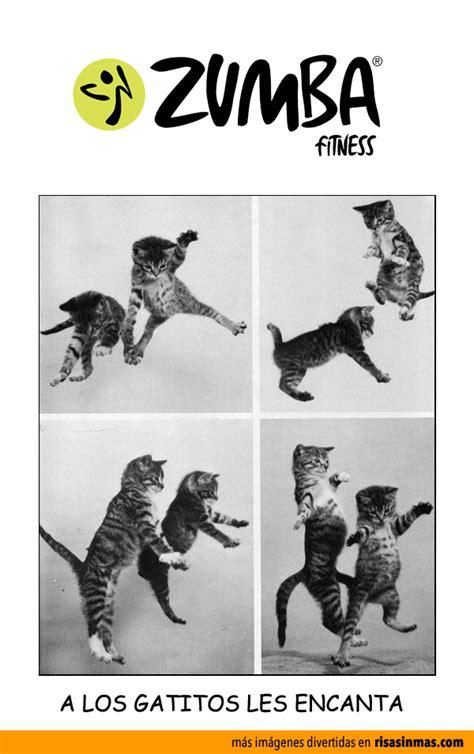 Imagenes Chistosas Sobre Zumba | im 225 genes divertidas de zumba