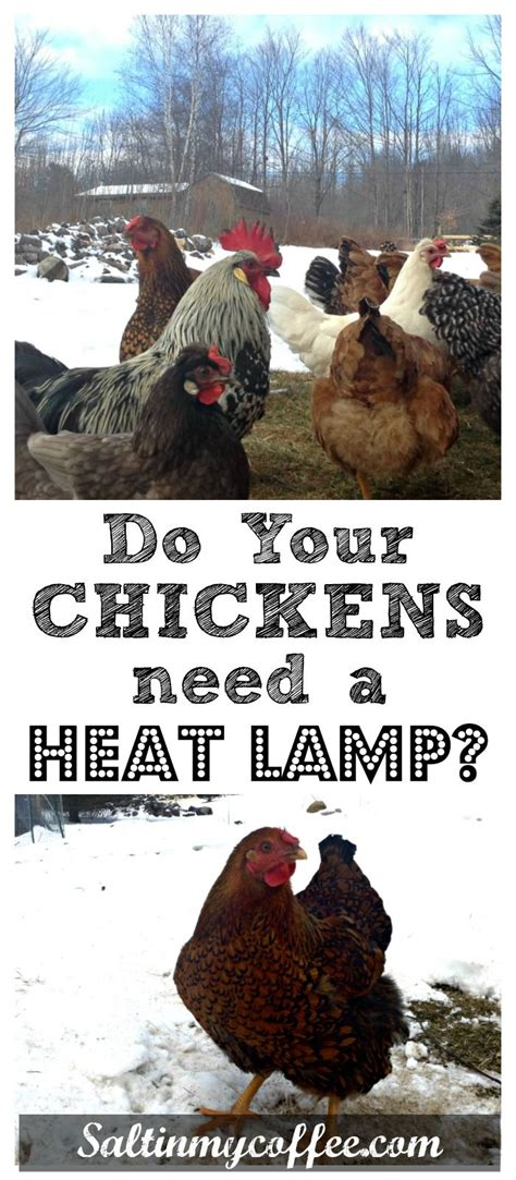 heat l for chickens in winter 100 best images about chickens s and more on
