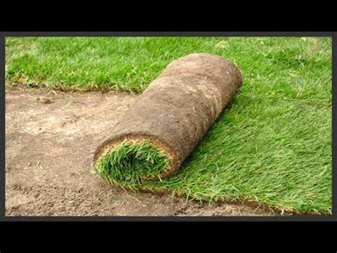 grass patches home depot 25 best ideas about sod installation on lawn