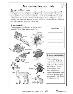 animal worksheet new 899 animal adaptations worksheets