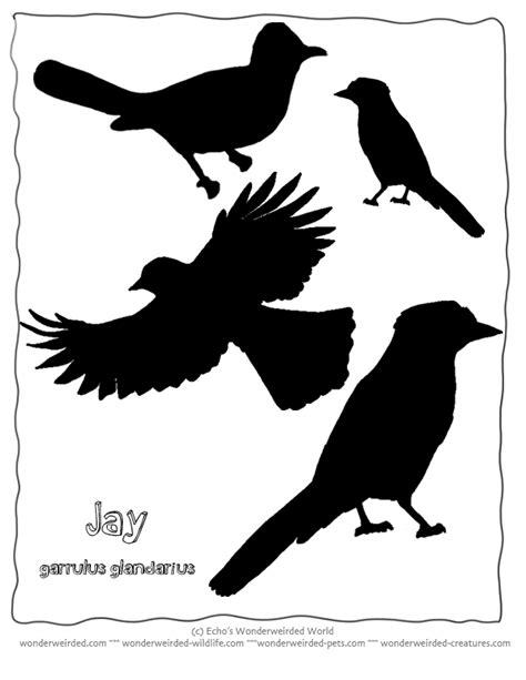 printable wildlife stencils bird silhouette jay free printables of bird silhouettes at