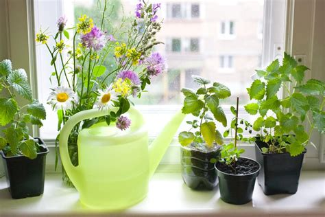 Windowsill Herb Garden Containers How To Grow A Windowsill Herb Garden My Uncommon Slice