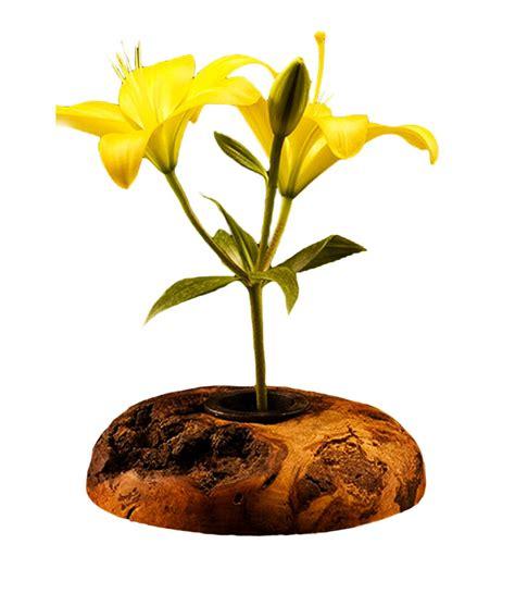 Vase Frog Wood Burl Ikebana Flower Vase Rustic Artistry
