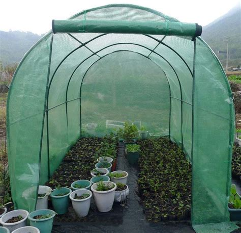 large pop  clear greenhouse cover  cold frost
