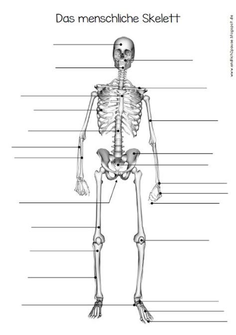 Skelett Arbeitsblatt