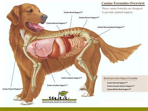 puppy anatomy canine organs diagram canine free engine image for user manual