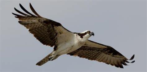 bird sightings the boston globe