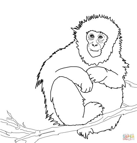 Japanese Macaque Coloring Page | japanese macaque or snow monkey coloring page free