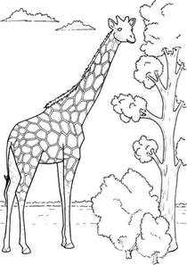 kids giraffe coloring 3 171 funnycrafts