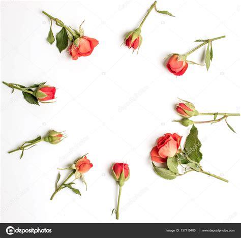 boccioli di fiori telaio rotondo con boccioli di fiori rosa corallo