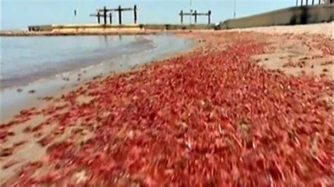 imagenes de mareas rojas regresa la marea roja a la isla del padre telemundo 40